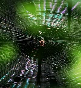 light spider web
