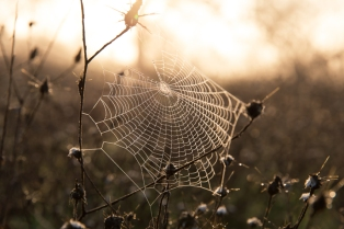 sunrise-spider-web.jpg
